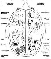 Асимметрия полушарий головного мозга