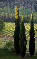 Виноградники Кьянти